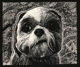 Scratchboard Drawing Print