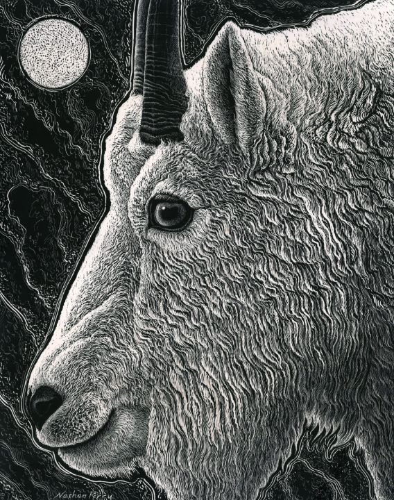 Mountain Goat - Nathan Perry Fine Art