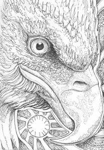 Eagle Eye 01 - Nathan Perry Fine Art