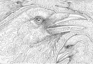 Ravens 01