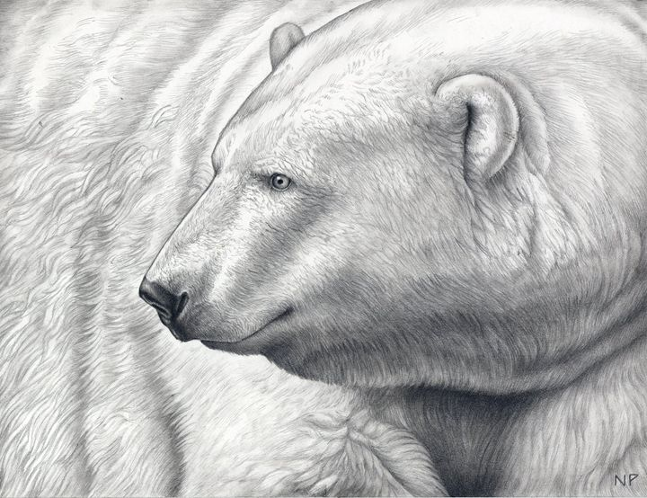 Polar Bear - Nathan Perry Fine Art