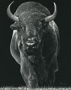 American Buffalo - Nathan Perry Fine Art