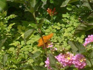 Butterfly In A Bush
