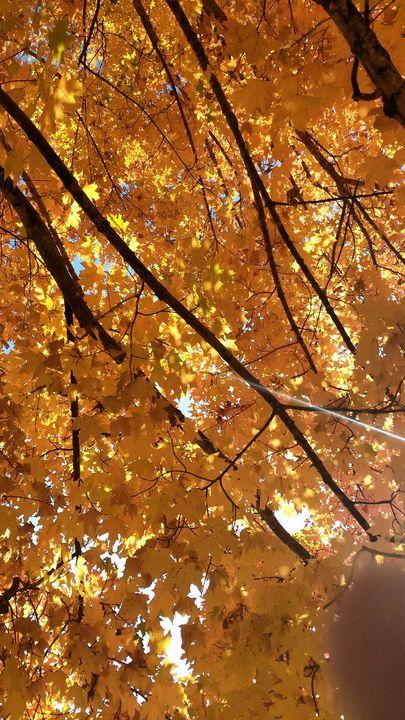 Fall Leaves - Digital Perfections