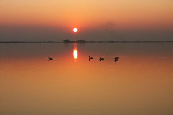 Swans at sunset - my stuff