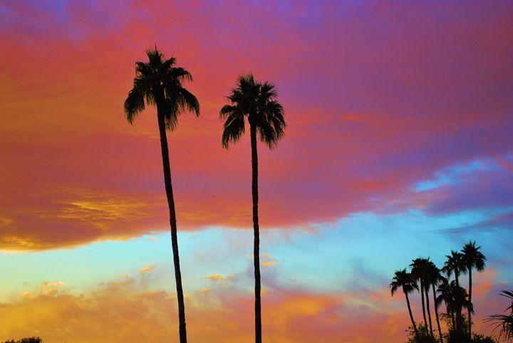 Arizona Palms Sunset - Richard W. Jenkins Gallery