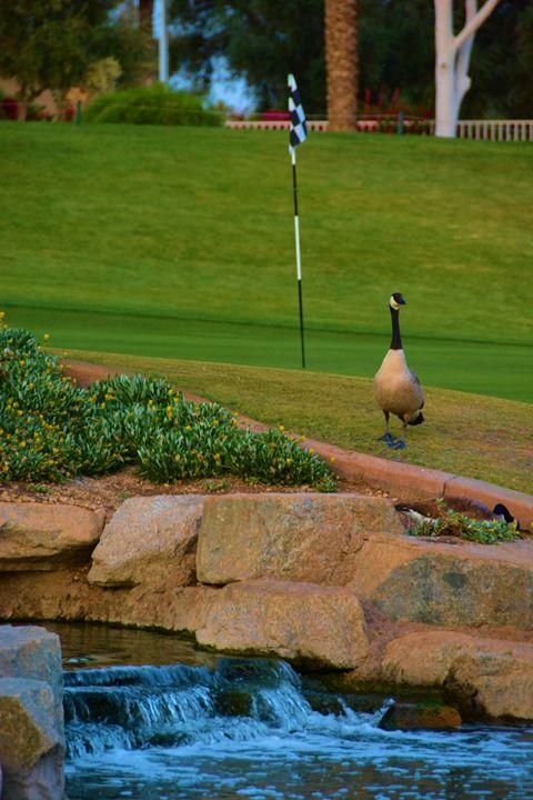 Ocotillo Golf Club - Richard W. Jenkins Gallery