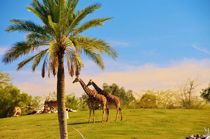 Two Giraffes - Richard W. Jenkins Gallery