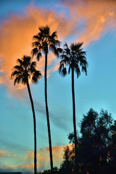 Three Palms Sunset - Richard W. Jenkins Gallery
