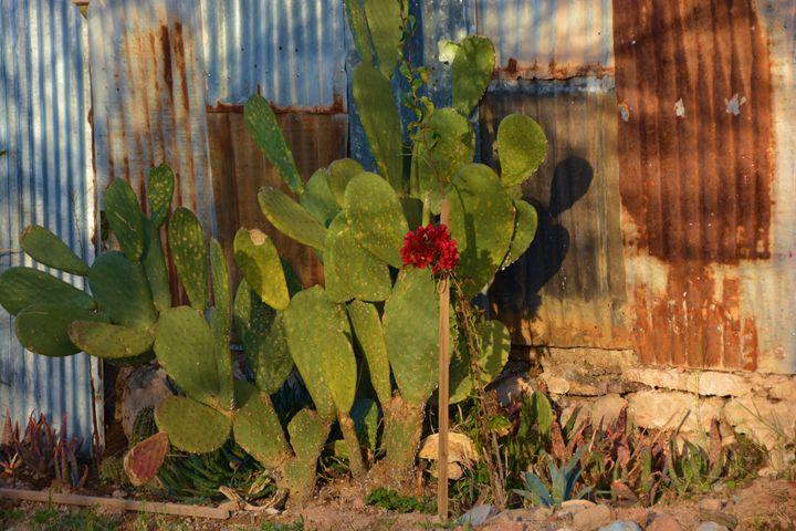 Cactus and Rusty Walls - Richard W. Jenkins Gallery