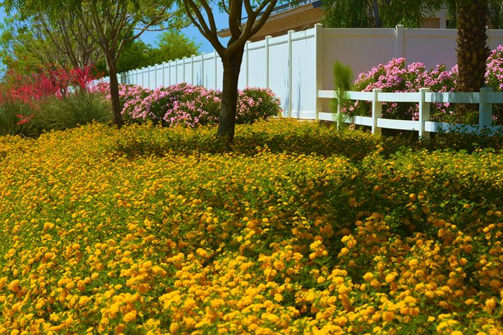 Arizona Colors - Richard W. Jenkins Gallery