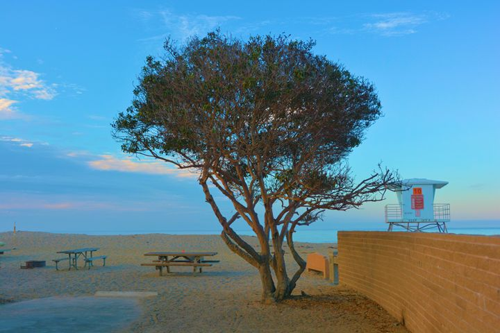 Lone Tree On the Beach - Richard W. Jenkins Gallery