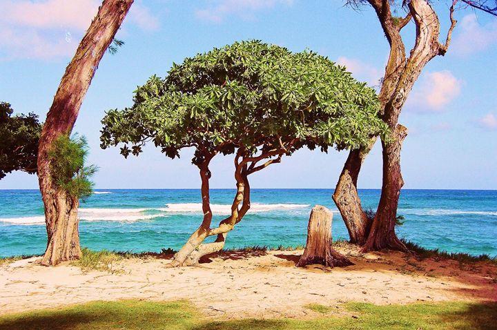 Lone Tree Hawaii - Richard W. Jenkins Gallery