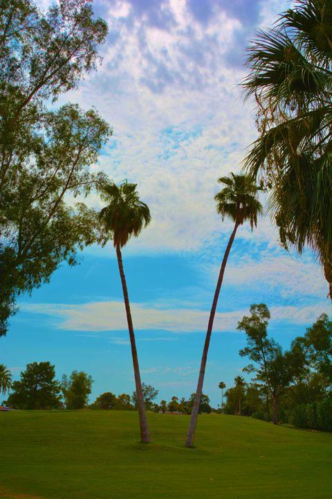 Twin Palm Trees - Richard W. Jenkins Gallery