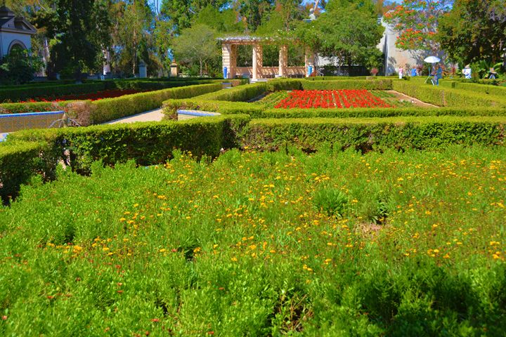 Flower Garden - Richard W. Jenkins Gallery