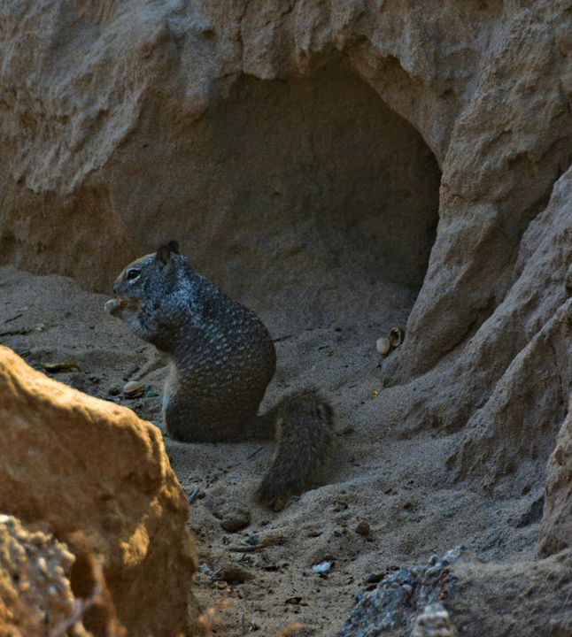 Squirrel on the Beach - Richard W. Jenkins Gallery