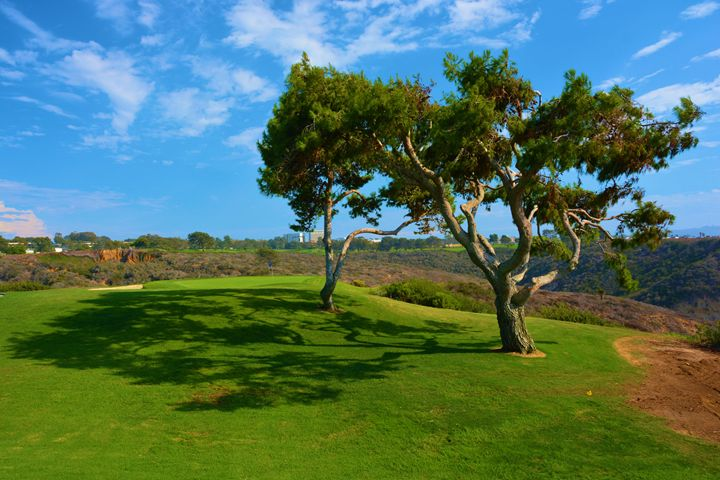 Cypress Trees On Torrey Pines - Richard W. Jenkins Gallery