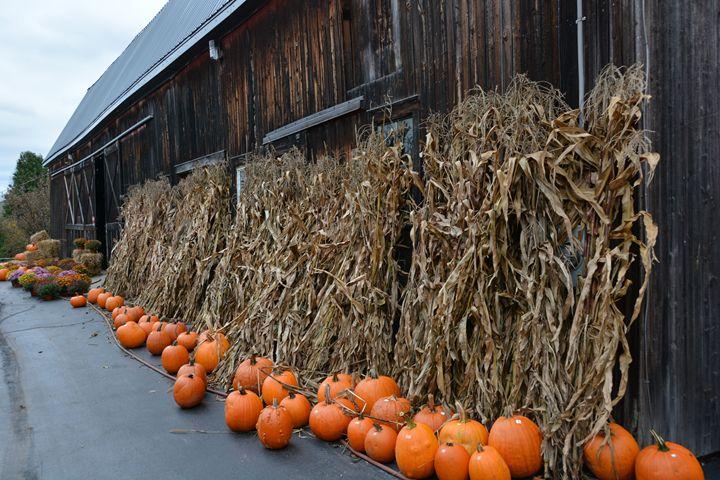 Pumpkins and old Barn - Richard W. Jenkins Gallery