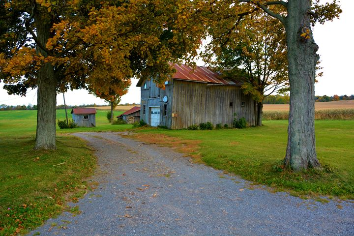 Pathway to a barn and shed - Richard W. Jenkins Gallery