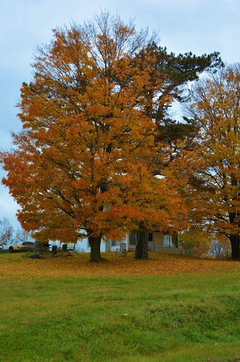 Golden Elm Tree - Richard W. Jenkins Gallery