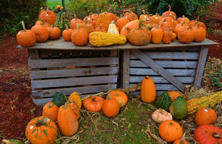 Harvest Time - Richard W. Jenkins Gallery