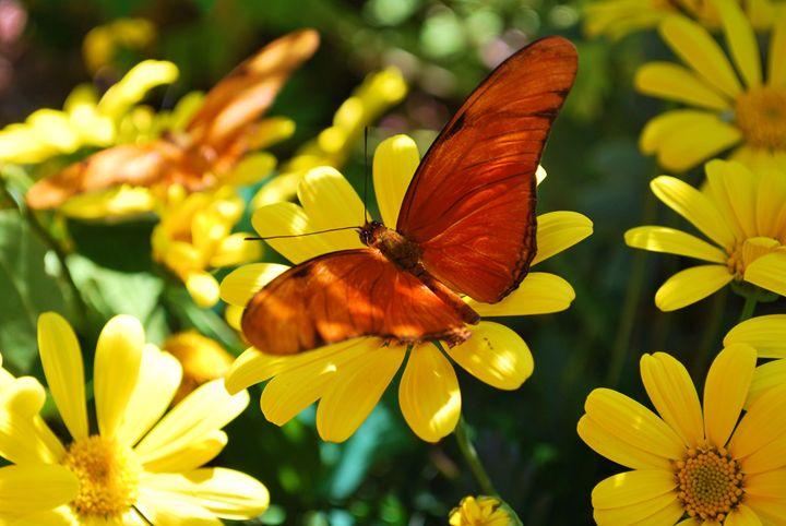 Golden Butterfly - Richard W. Jenkins Gallery