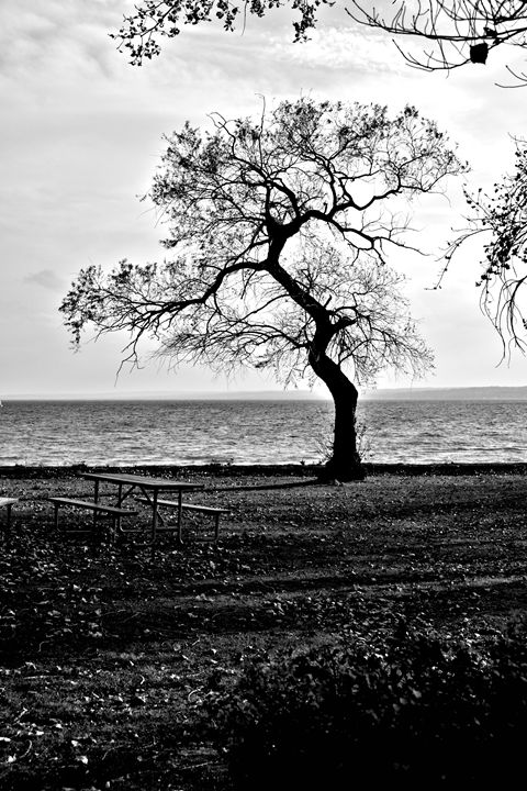 Lone Tree Black and White - Richard W. Jenkins Gallery