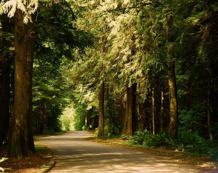 Red Wood Forrest - Richard W. Jenkins Gallery