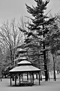 Black and White Winter Scene