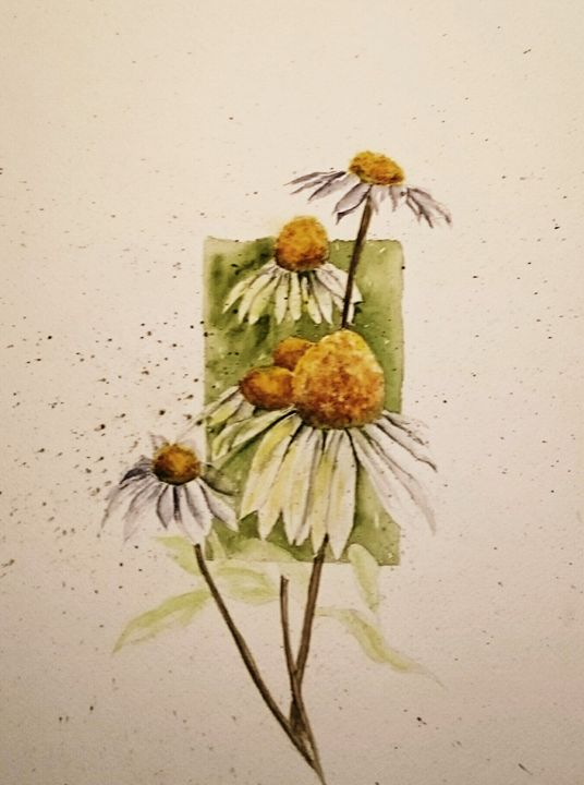 Spring daisy - Janet Steiner Contreras