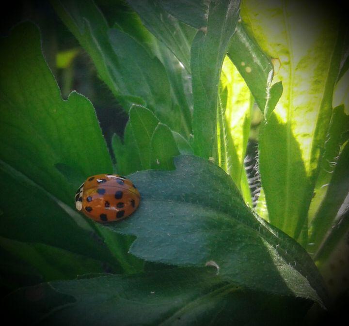 Ladybug2 - ModernArt