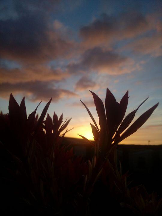 sunset dream - Maya