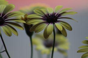 Flowers in the Haze