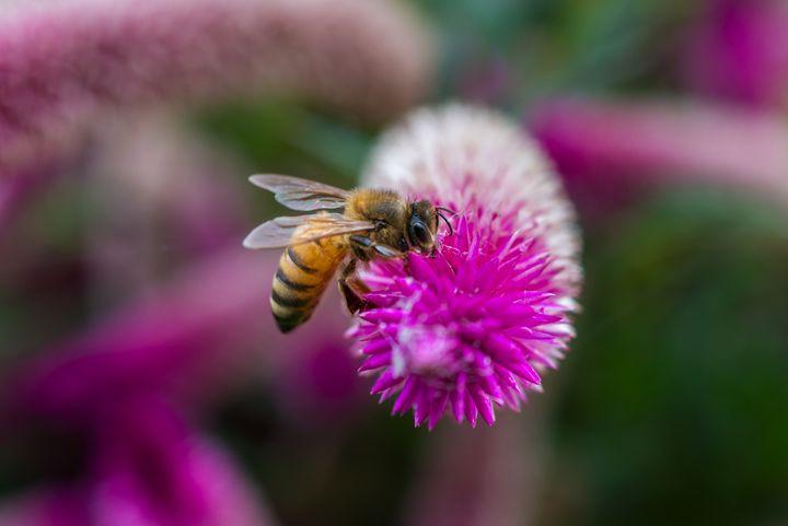 Bee fed - S. Johnson