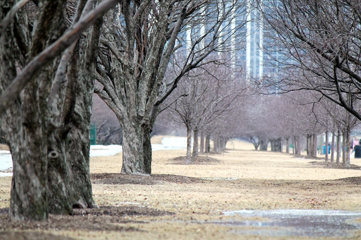 Line of Trees in the Winter - Kate's Photography
