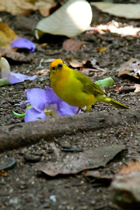 Yellow bird - Kate's Photography