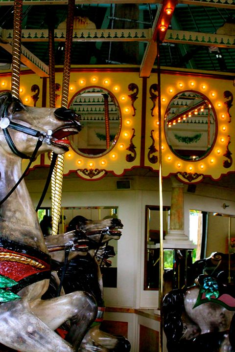 Carousal Horse - Kate's Photography