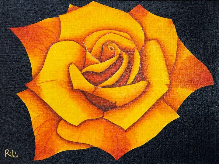 Orange Rose - Rolo