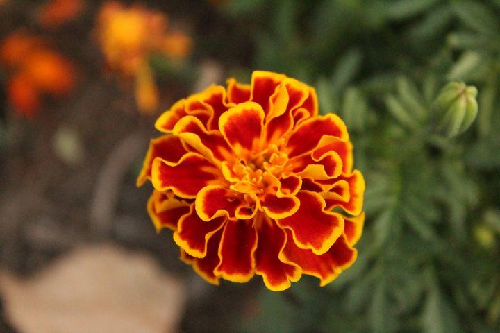 Flower - Crystal Stark Photography & Arts