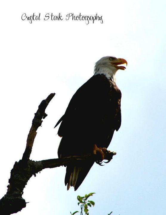 Eagle of WCB - Crystal Stark Photography & Arts