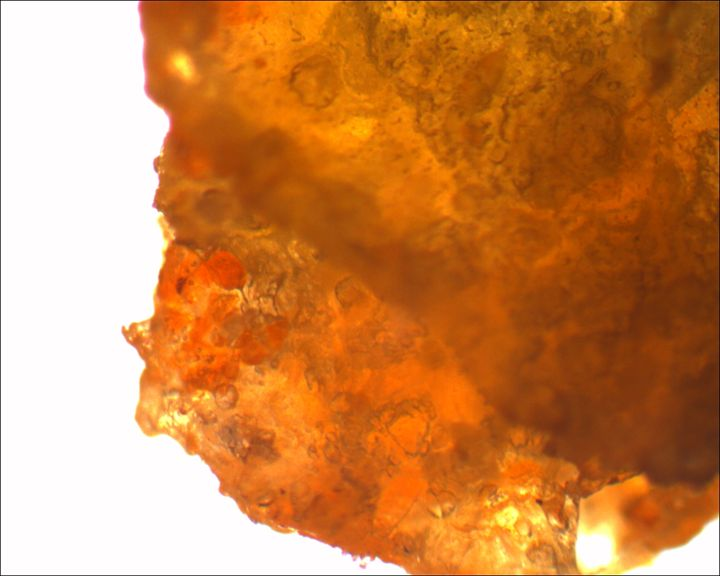 Crushed Doritos Chip - Calvin Franklin: Photomicrography