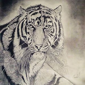 Tigress at Heart