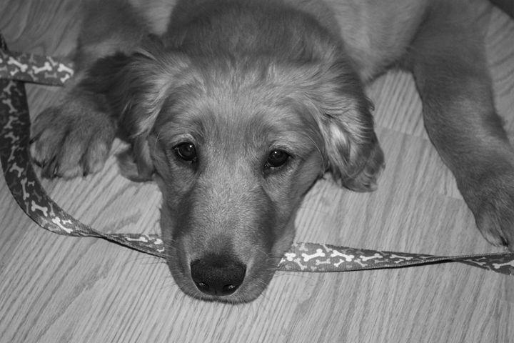 Puppy Time - Catching Zen Studios