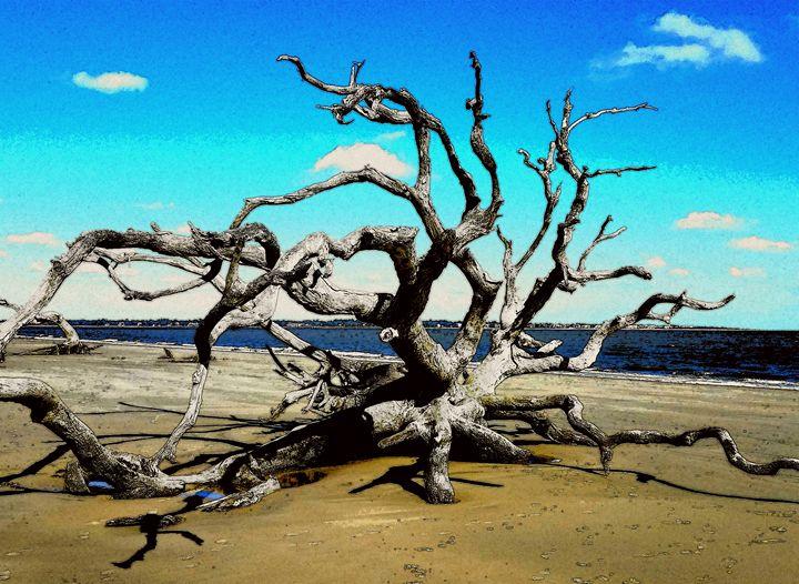 Driftwood Beach - David McCune Jr