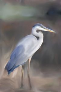 Blue Heron - Don Wright
