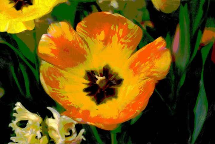tulip - Don Wright