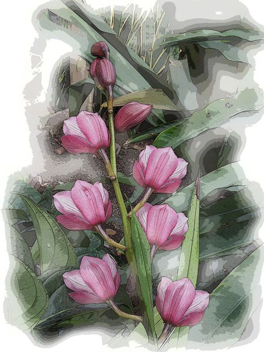 Pink Tulips - Don Wright