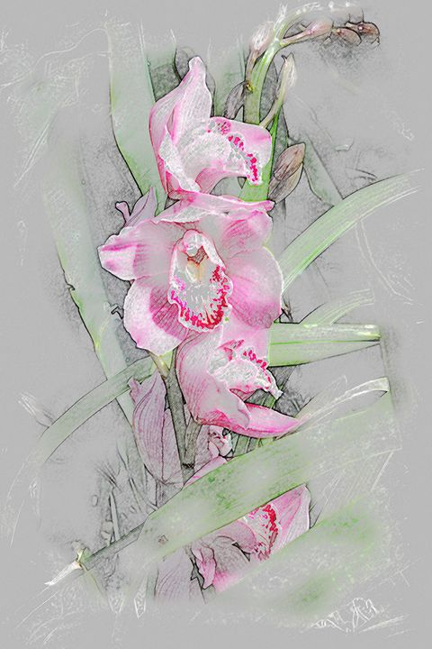 Orchidaceae Family - Don Wright
