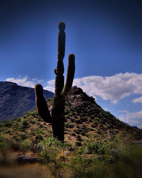 Top of the Desert - John Wortman