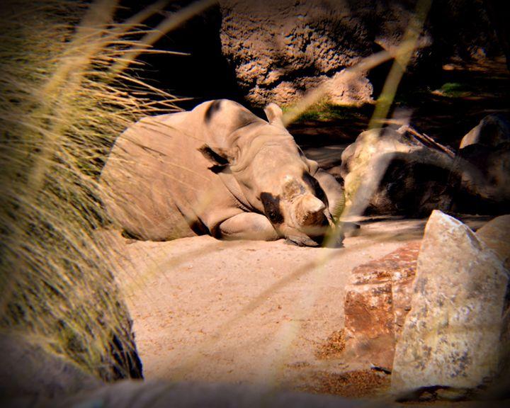Rhino - John Wortman